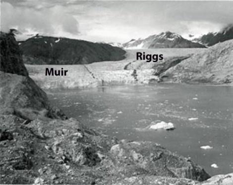 1950_muir_glacier