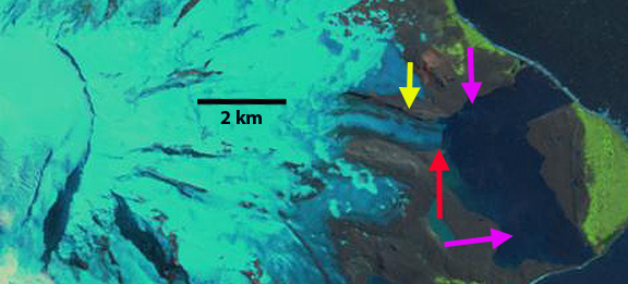 Landsat 2010 image, annotated by Mauri Pelto.  Arrows mark the toe of the glacier in 2001 (purple), 2010 (red), and 2013 (yellow).  Additional images are available on Mauri Pelto's blog.